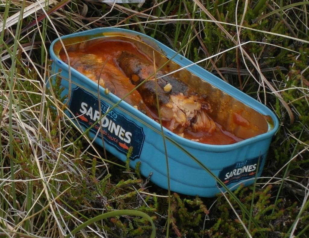 065 Sardines